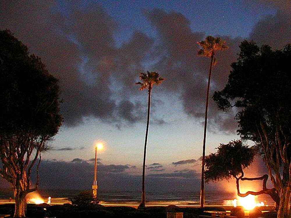 Ocean Beach in Sunset Palm Trees
