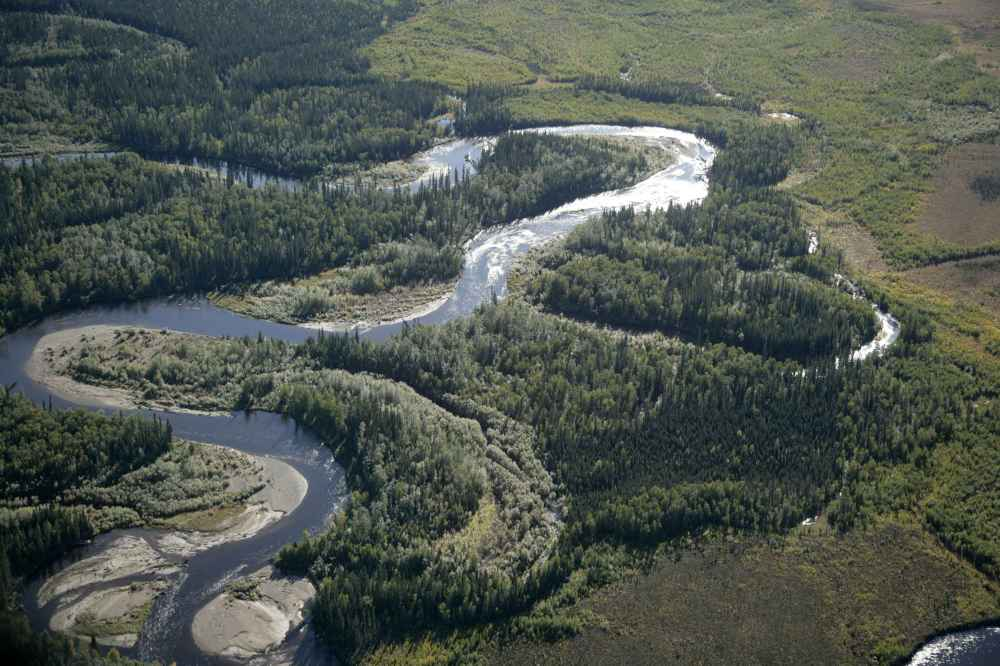 Wild Forest and River Landscape